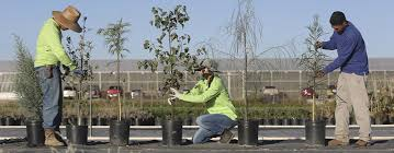 tep s new trees for you program tucson electric power