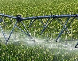 irrigated corn pivot irrigation