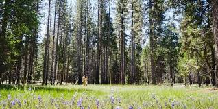 redwood forest wedding venue the redwoods in yosemite weddings get prices for wedding venues