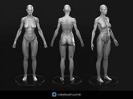 Female Anatomy Reference 15369197 914943581940571 150249269526302676 O Jpg 1920 1439 3d