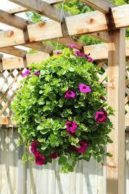 best 25 hanging flower baskets ideas on pinterest flower