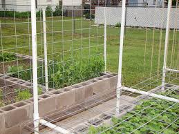 Pole Bean Trellis My Survival Garden Trellis Update Pics Welcome To The