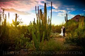 Scottsdale Botanical Gardens Botanical Garden Wedding