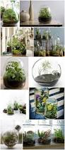 289 best miniature gardens and terrariums images on pinterest
