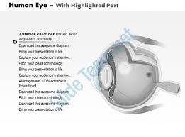 Function Of The Blind Spot In The Eye Structure Of Human Eye With Diagram Ppt Periodic Tables