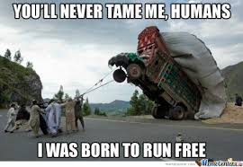 Free Funny Memes - you will never tame me humans i was born to run free funny truck meme