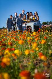 carlsbad flower garden lindsey u0026 jason wedding carlsbad flower fields california u2014 top