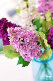 321 best lilac images on pinterest flowers lilacs and beautiful
