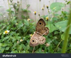Seeking Wings Pattern Similar On Wings Butterflythe Stock Photo 450336337