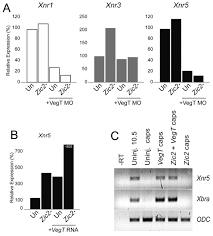maternal xenopus zic2 negatively regulates nodal related gene