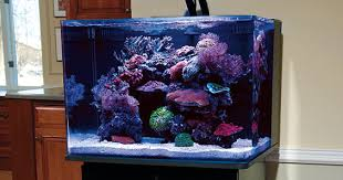 Aquascape Fish Nano Reef Aquariums How To Maximize Limited Aquarium Space