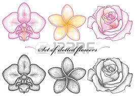 Flower Of Orchid - set with dotted flower of orchid plumeria or frangipani and