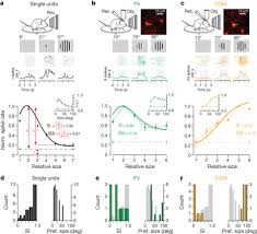 differences in spatial summation between three types of neurons in