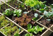 vegetable gardening obsessed with dirt