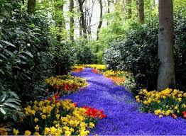 Spring Flower Pictures Organic Landscaping Tree Spraying Hamptons Tick Control
