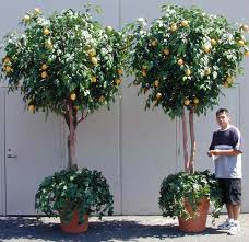 artificial trees commercial plantscaping make be leaves