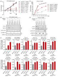 si e social cic atxn1l cic and ets transcription factors modulate sensitivity to