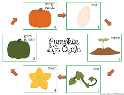 life cycle of a pumpkin clipart clipartxtras