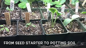 how to start vegetable seeds indoors for garden transfer seed