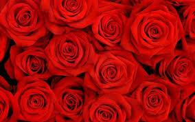 a dozen roses item 100102 dozen roses exchange place florist