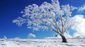 beautiful background winter snow tree hd wallpaper