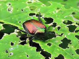 how to inspect your garden for insects u2013 free gardening tips