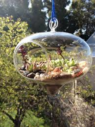 the 25 best large glass terrarium ideas on pinterest glass