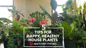 the 5 biggest mistakes plant owners make apartment therapy