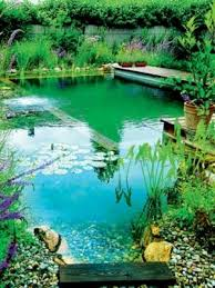 Natural Backyard Pools by Best 20 Natural Swimming Pools Ideas On Pinterest Natural Pools