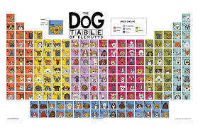 periodic table of dogs the dog table poster angry squirrel studio