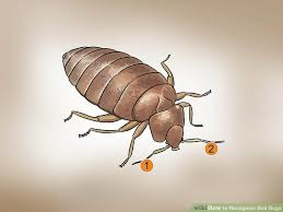 Common Bathroom Bugs How To Recognize Bed Bugs 12 Steps With Pictures Wikihow