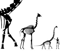 sauroposeidon sauropod vertebra picture of the week page 5