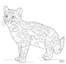 oncilla tiger cat coloring page free printable coloring pages