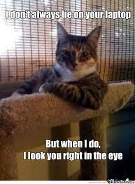 Cat Laptop Meme - the cat s laptop by liam fisher 3363 meme center