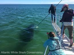 chatham shark center thesharkcenter twitter
