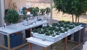 home built hydroponic system garden seed starting and