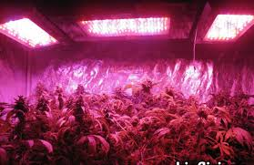Grow Room Lights Lighting Cannabis Grow Lights Beautiful Indoor Plant Light Bulb
