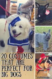 halloween meme funny best 25 large dog halloween costumes ideas only on pinterest