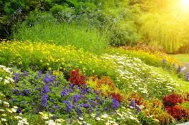 garden images u0026 stock pictures royalty free garden photos and