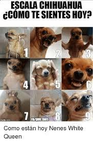 Memes De Chihuahua - escala chihuahua ccomo tesientes hoy rbiouiltross como est磧n hoy