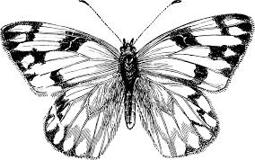 butterfly art images free download clip art free clip art on