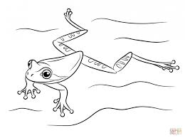 printable frog coloring pages kids picture animal toad