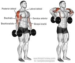 Muscles Used When Bench Pressing 13 Best Weightlifting Arms Images On Pinterest Arm Exercises