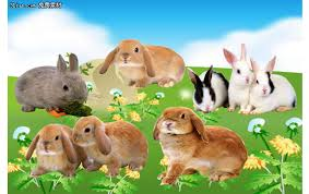 rabbit material rabbit psd layered material animal psd file free psd free