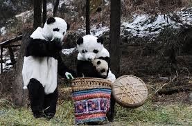 panda nanny greatest job huffpost