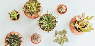 the best places to buy plants in brisbane