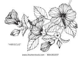 hibiscus stock images royalty free images u0026 vectors shutterstock