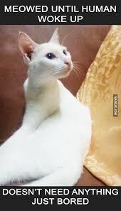Cat Facts Meme - top 26 thug life cat memes thug life meme