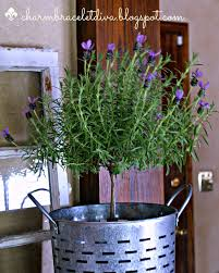 Rosemary Topiary Our Hopeful Home Fresh Lavender Topiary