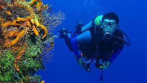 home aqua tutus diving club